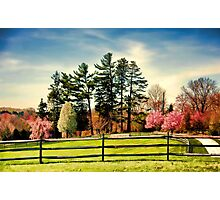 Spring Has Sprung!! Photographic Print
