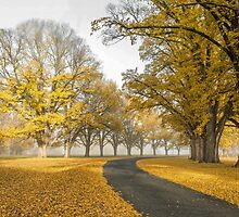 Gostwyck Road is lined with Gold - Uralla NSW Australia by Beth  Wode