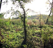 Autumn Beginning by branko stanic