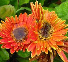 Autumn flowers by ienemien