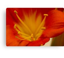Orange Clivia Lily - Macro Canvas Print