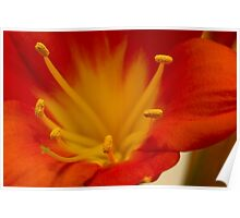 Orange Clivia Lily - Macro Poster