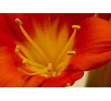 Orange Clivia Lily - Macro Photographic Print