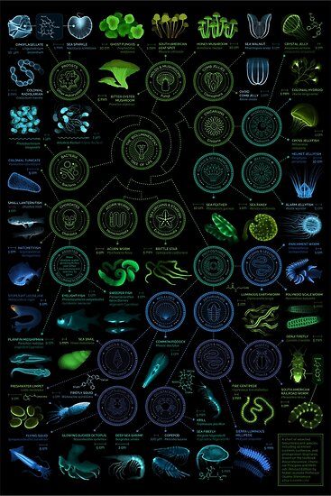 A visual compendium of glowing creatures by Eleanor Lutz