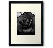 Camellia Black and White 3 Framed Print