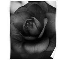 Camellia Black and White 3 Poster