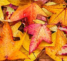 Autumn Sweet Gum Leaves by Kenneth Keifer