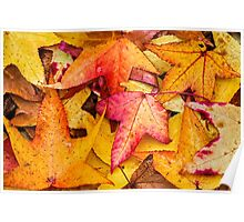 Autumn Sweet Gum Leaves Poster