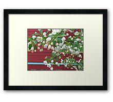 Apple blossoms in spring Framed Print