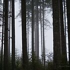 Late afternoon fog creeping in by Rainydayphotos