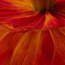 Orange Zinnia Flower Petals - Macro  by Sandra Foster