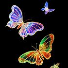 Butterflies - Night Flight by Linda Callaghan
