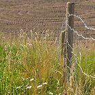 Fences In Full Sun by Made By Maryann Photography