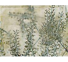 wild grass 30 Photographic Print
