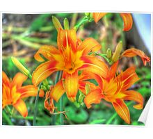 Ditch Lilies or Day Lilies Poster
