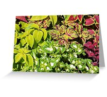 Colorful pattern of leaves Greeting Card