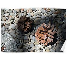 Pine cones on pebbles Poster