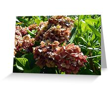 Natural background with red flower branch and green leaves Greeting Card