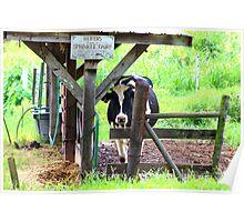 A Heifer on the Family Farm Poster