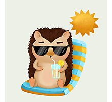 Hami the Hedgehog - Chilling in the Sun Photographic Print