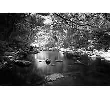 Freshwater Creek Photographic Print