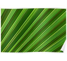 Green palm leaf close-up Poster