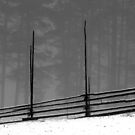 8.12.2016: Old Fence by Petri Volanen