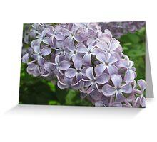 Lilac 9 Greeting Card