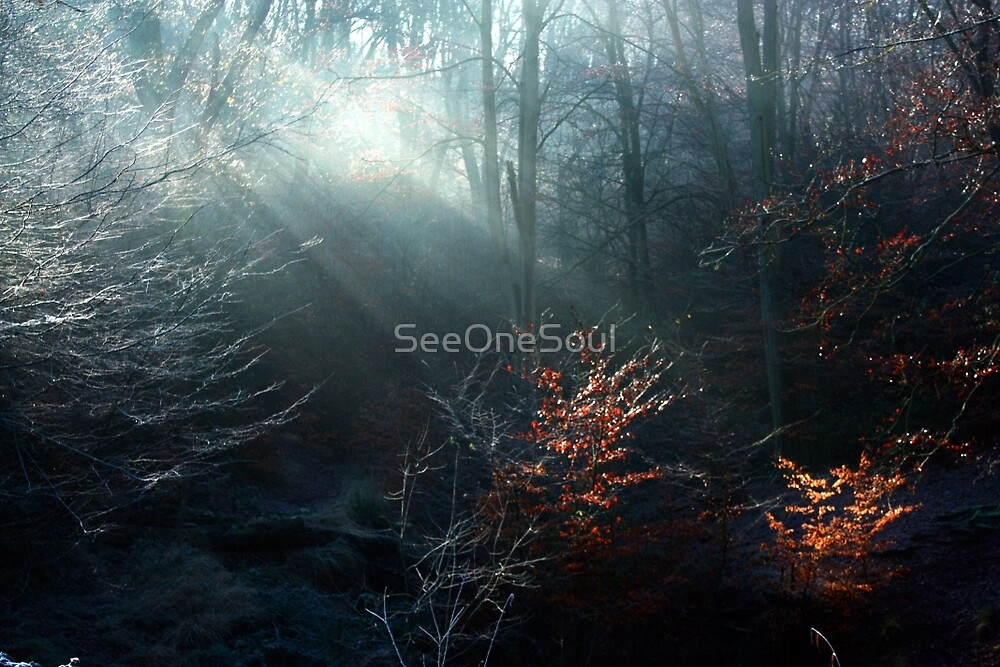 First Rays on a Frosty Morning by SeeOneSoul