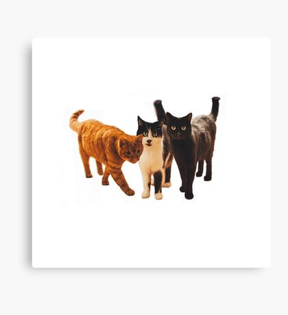 Three cats!  Canvas Print