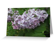 Lilac 4 Greeting Card