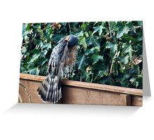 Post bathing preen Greeting Card