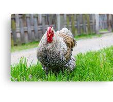 Cochin chicken Canvas Print