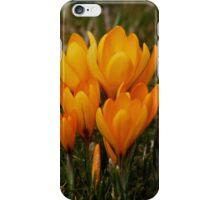 Spring Crocus iPhone Case/Skin