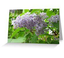 Lilac 3 Greeting Card