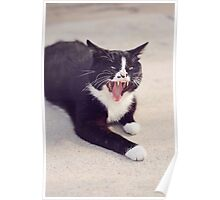 Vampire Cat Poster