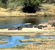Olifants River - the hippo's home by Graeme  Hyde