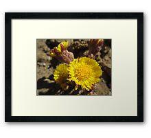 Like Flowers in a Desert  Framed Print