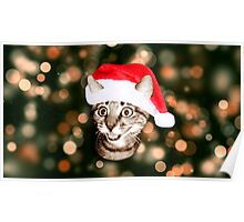 Christmas Hat Cat Poster