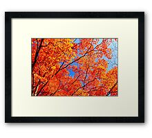 Autumn Leaves Blue Sky Fall Season Maple Trees Framed Print