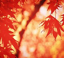 Sunlight Behind Vintage Autumn Leaves 2 by Beverly Claire Kaiya