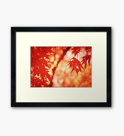 Sunlight Behind Vintage Autumn Leaves 2 Framed Print
