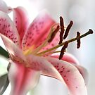 pink lilly by Karen E Camilleri