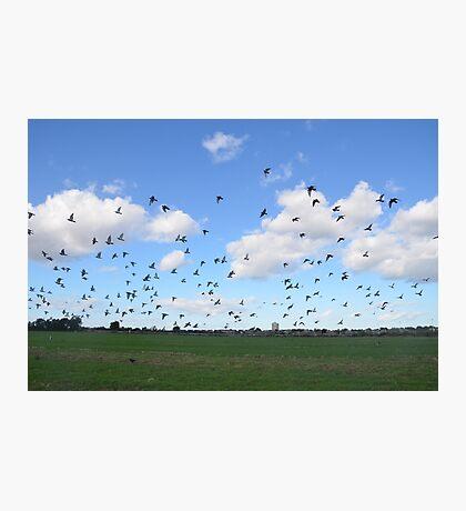Flock Of Pigeons Photographic Print