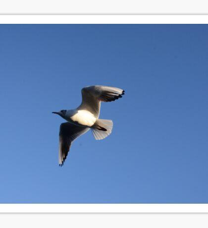 Little Gull In Flight Sticker