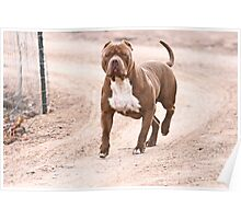 Hexin the pit bull  Poster