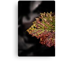 the beauty of stress Canvas Print