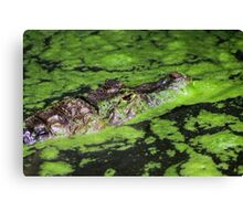 Hidden in Green Canvas Print