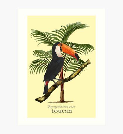 Toucan Tropics Art Print