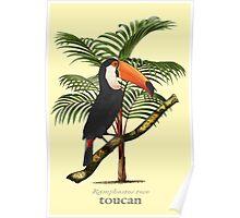 Toucan Tropics Poster
